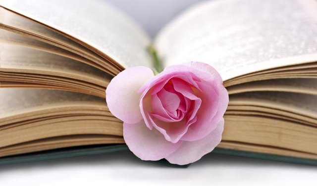 A close-up of a pink rose in the seam of an open book.