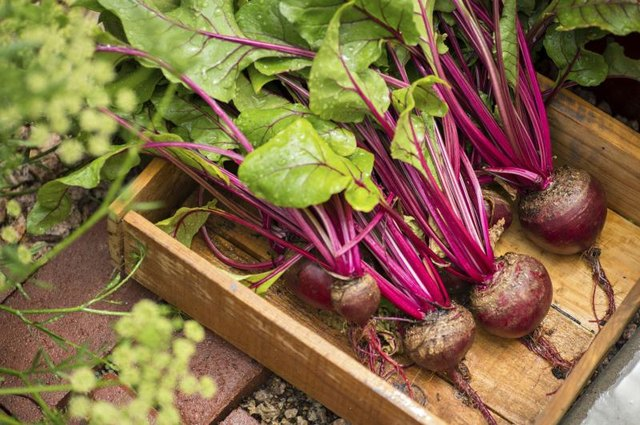 How To Harvest And Store Beets With Pictures Ehow