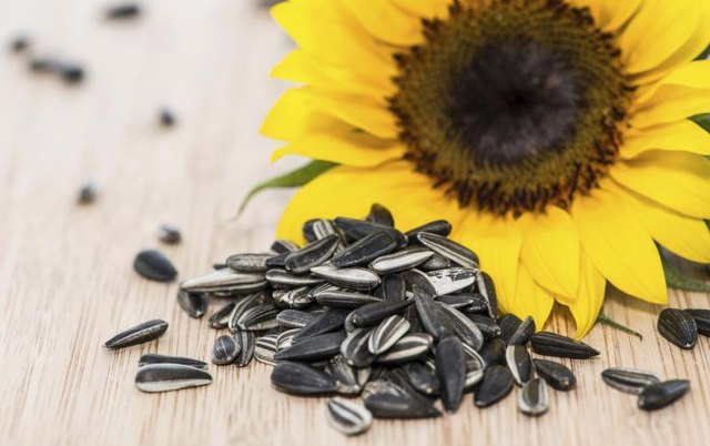 Small pile of sunflower seeds