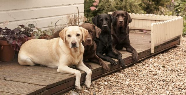 Mulch Backyard Dogs : How to Landscape a Backyard for Dogs