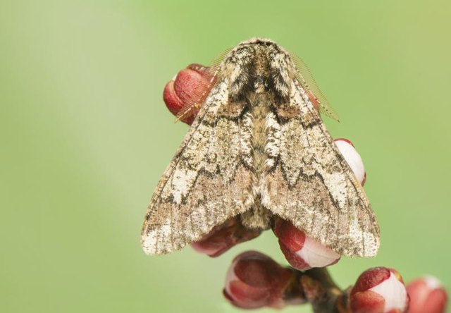 How To Get Rid Of Moths Outside With Pictures Ehow