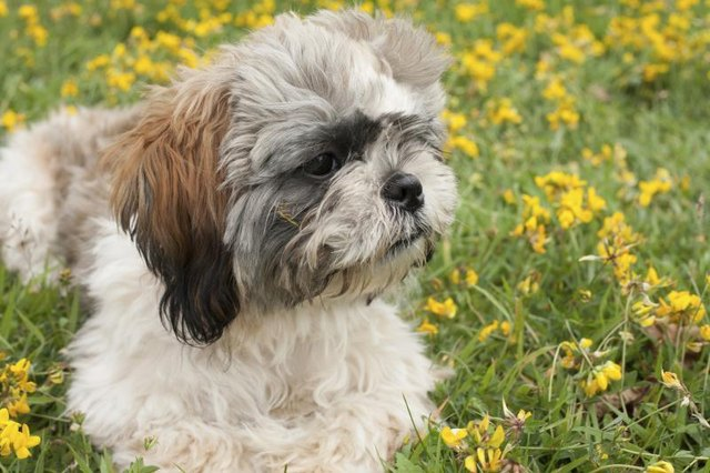 Which Dog Breeds Have Double Coats? (with Pictures) | eHow