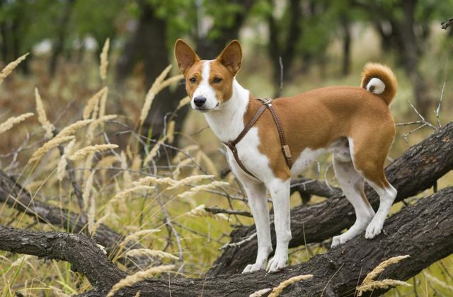 The Best Dog Breed For Low Shedding Amp Smell With Pictures