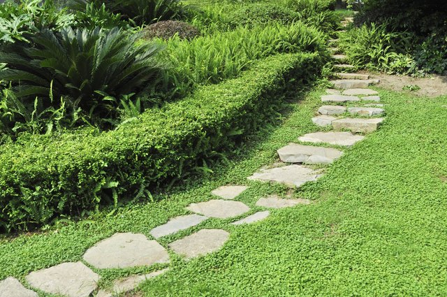 Curve your rock walkway around existing features or plants.