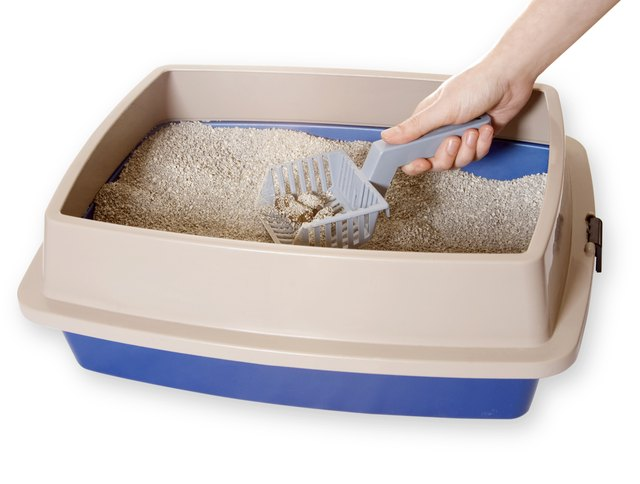 A scoop picking up litter from a litter box