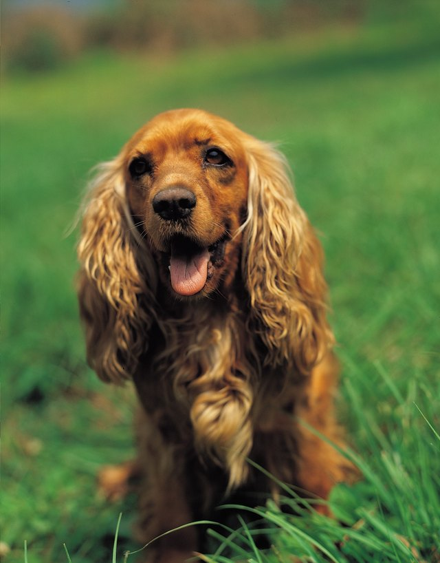 Can Medications Make Dogs Pant More