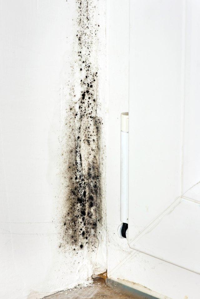 charming inhaling black mold Part - 4: charming inhaling black mold good looking