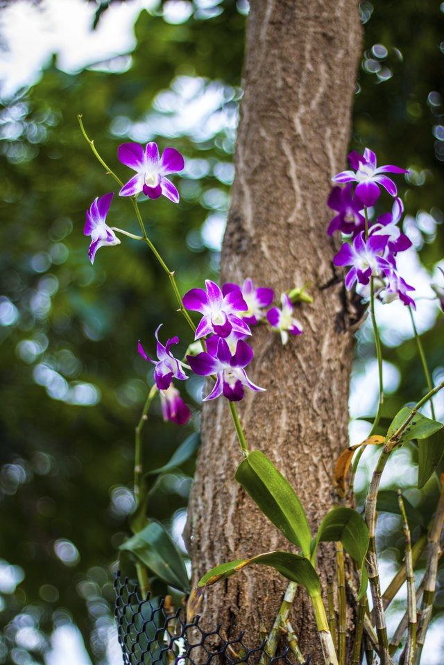 Orchids are distinctive because of their stamens and pistils.