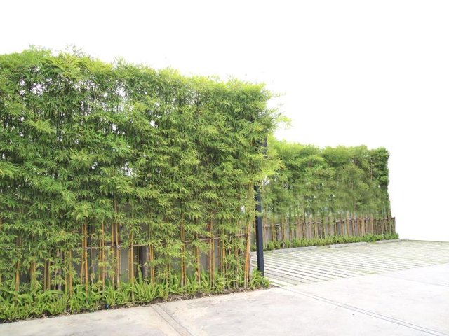 Tall Plants For A Privacy Fence With Pictures EHow