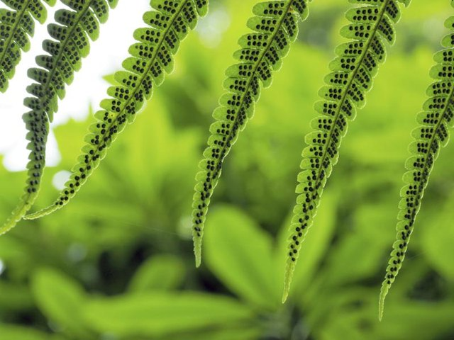 Leaf Contents General characteristics Morphology (large