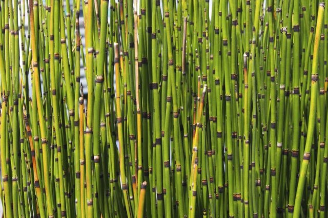 How to Get Rid of Bamboo (with Pictures) | eHow