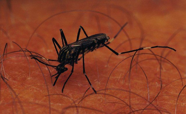 Malaria would kills millions more per year if not for the efforts of microbiologists.
