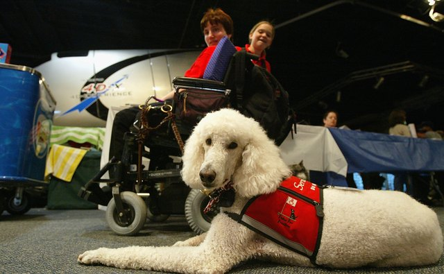 Learn how guide and service dogs help people.