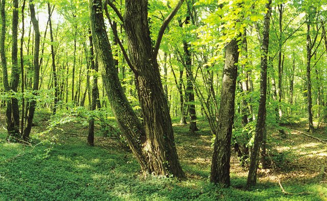 Woodlands can also be managed as an agriculture crop, yielding renewable energy and wood products.
