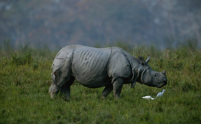 India's Kaziranga National Park lies in the Terai-Duar grasslands.