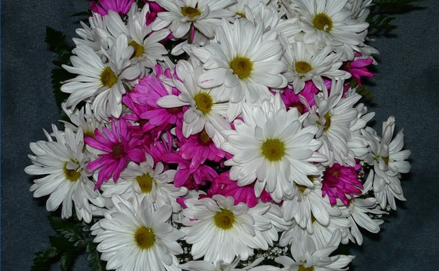 Daisies, associated with the fifth anniversary, can be incorporated into celebratory activities.