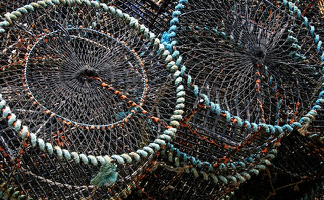 Ring nets are used to catch crab.