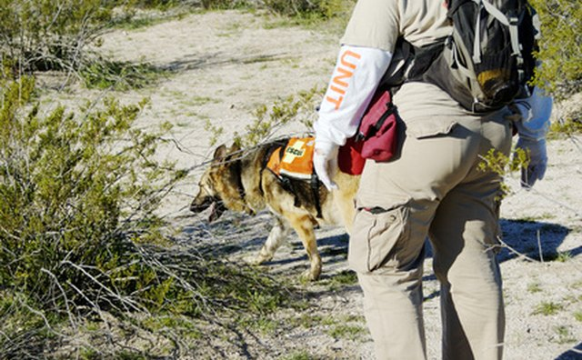 Search dogs can find clues searchers may not see.
