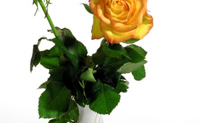 Yellow roses are associated with 50th anniversary celebrations.