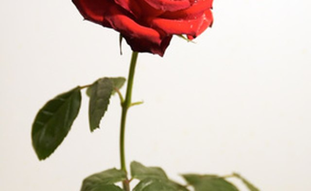 The soldier's sacrifice is symbolized by a red rose.