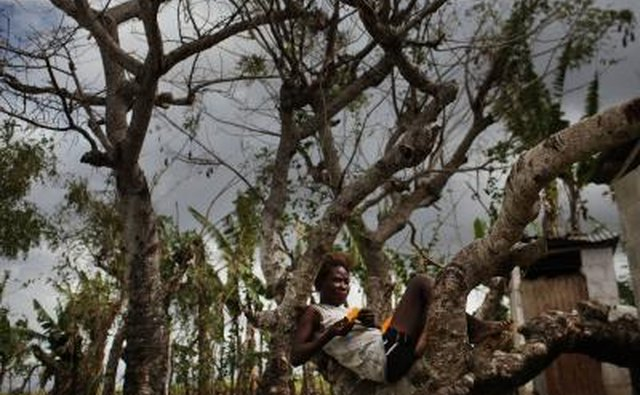 Woman relaxes in a tree in San Pedro, Dominican Rep.