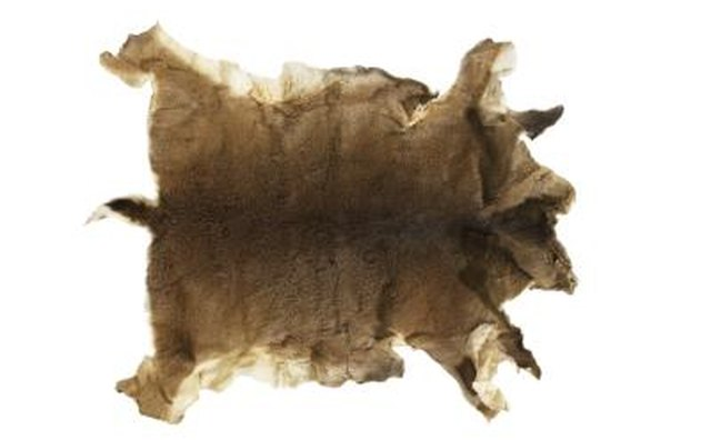Native Americans processed animal skins with scraping stones.
