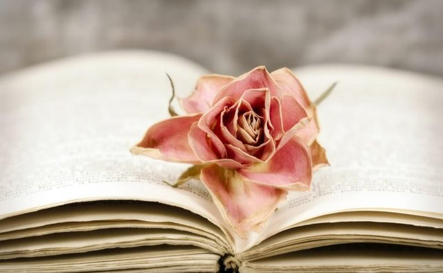 Pink rose on top of poetry book
