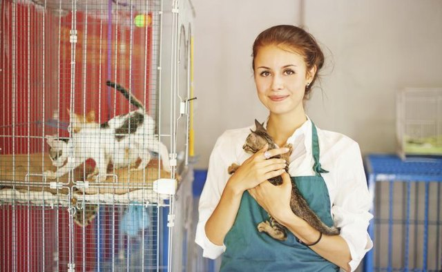 Woman holding a cat at an animal shelter.