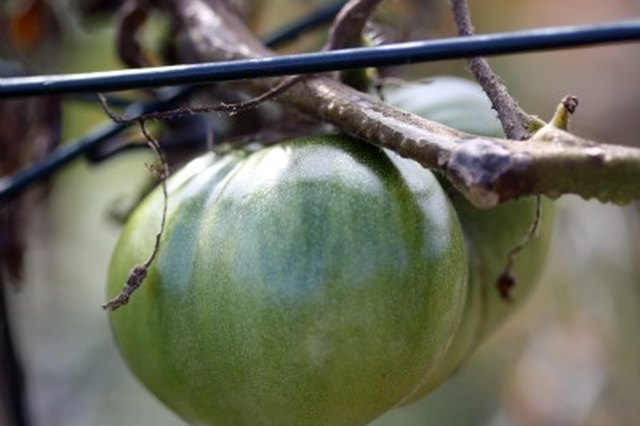 Get Creative: Green Tomatoes