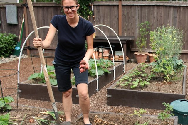 Time to Plant Your Thanksgiving Veggies, but Probably Not Where you Think