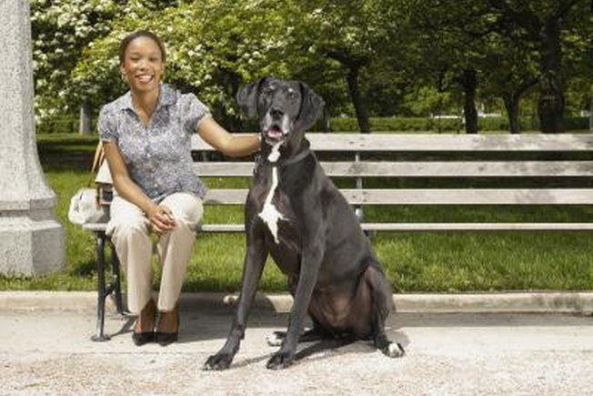 [Article Image] - What Is the Tallest Dog Breed?