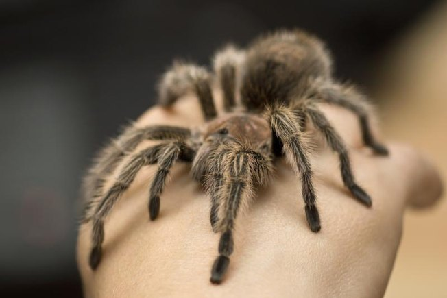 [Article Image] - How to Care for a Pet Spider