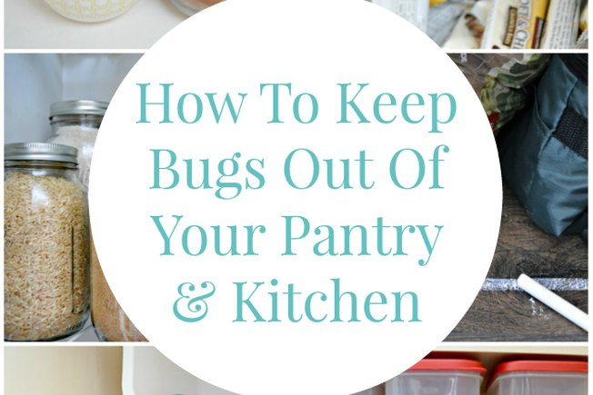[Article Image] - How to Keep Bugs Out of Your Pantry and Kitchen