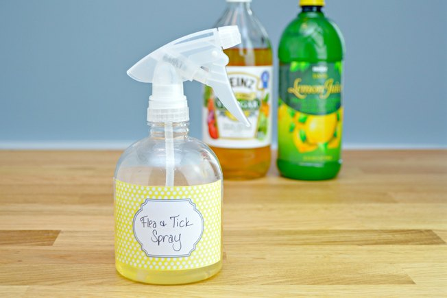 [Article Image] - How to Make a Homemade Flea and Tick Repellent