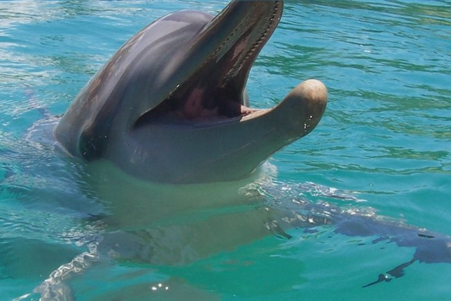 [Article Image] - What Do Dolphins Look Like?