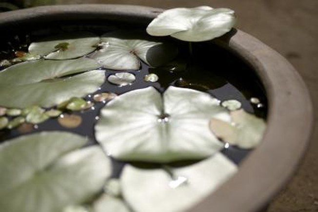 [Article Image] - How to Create a Backyard Pond With a Hard Shell Pond Tub