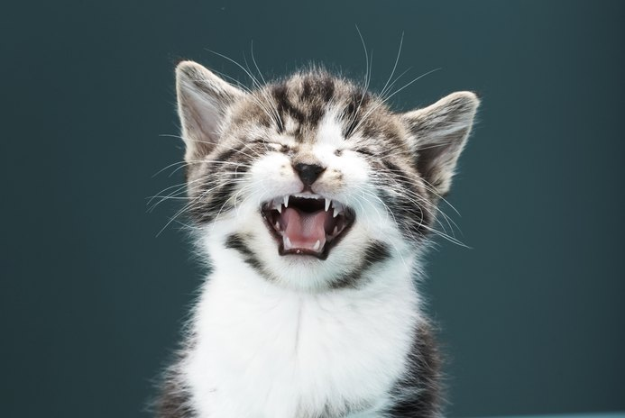 At What Age Does a Kitten Start Meowing?