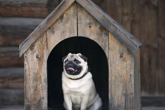 Outdoor Dog Kennel Flooring Ideas