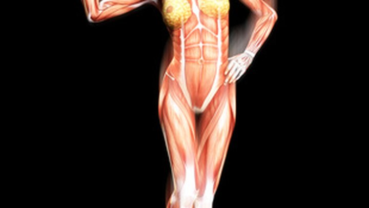 Types of Muscles in the Body. Muscle is a bundle of tissue that is capable of contracting. The primary functions of muscles are to generate force and cause motions.  Your body has more than 600 different types of muscles. Muscles also contribute to 40 to 50 percent of your weight. Some muscles can be controlled consciously, while others are controlled automatically by your brain. There are three types of muscles: skeletal, cardiac and smooth. Each type of muscle has different characteristics and essential roles.