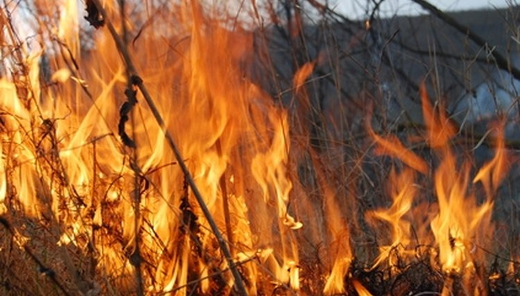 Learn the pros and cons of a forest fire.
