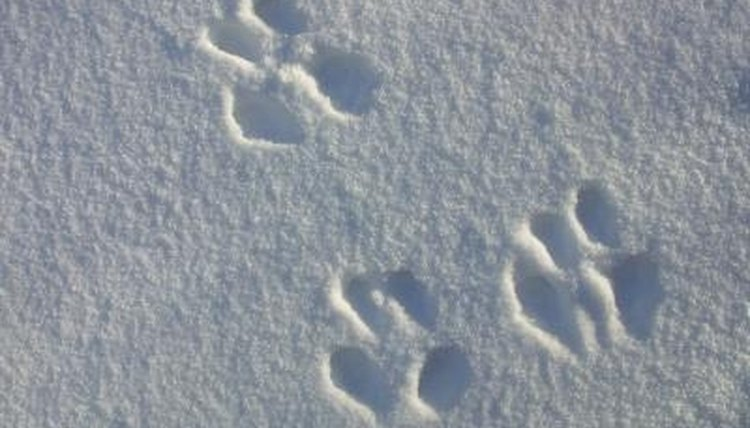 Teach children about animal footprints with games.