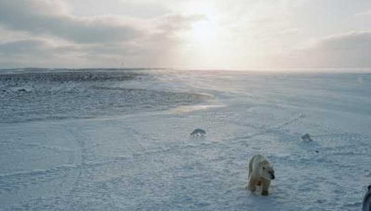 The Freezing Climate of the Tundra