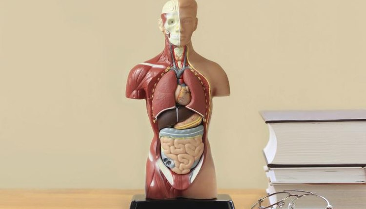 Anatomy model on table beside pile of books.