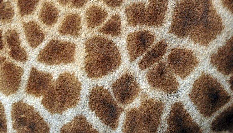 For a math lesson, create patterns of spots on a blank giraffe template.