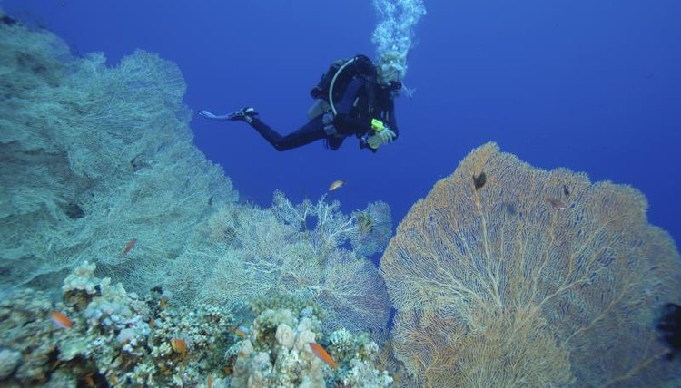 Diver on a coral reef