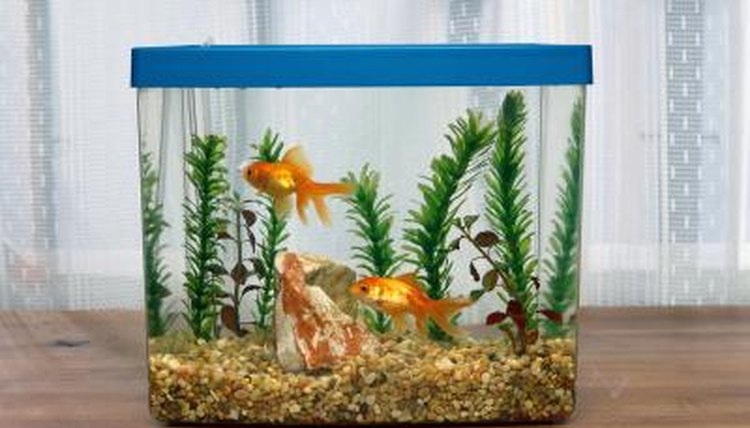 Gold fish can help teach first graders about living and non-living things.