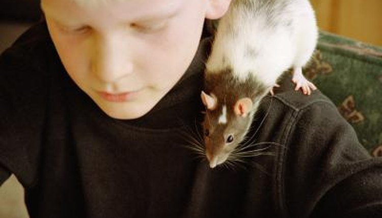 pro animal testing raini Medical beneifits of animal testing 123helpmecom 17 mar 2018 history and pros of animal testing essay - history and pros of animal testing abstract.