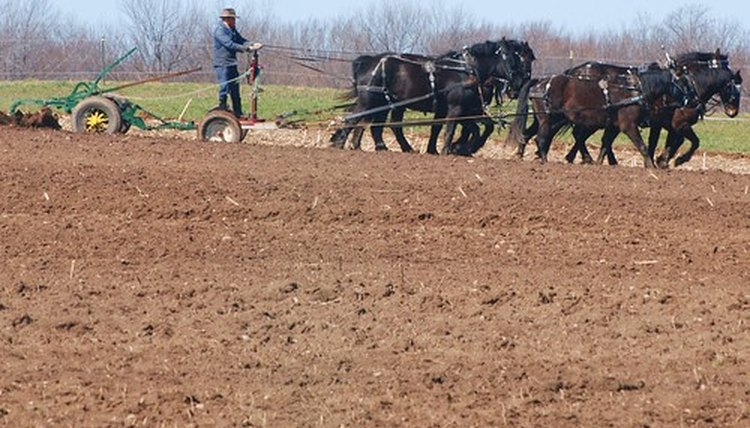 An Amish man plows a field that will eventually yield a bountiful harvest.