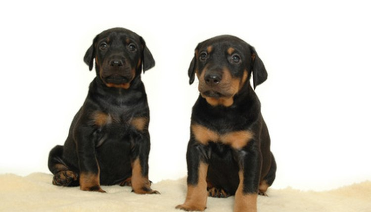 two sweet puppies image by Lars Christensen from Fotolia.com