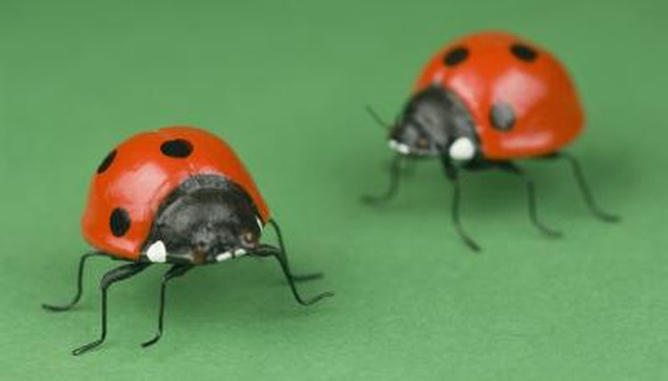 The Meanings Of The Colors Of Ladybugs Animals Mom